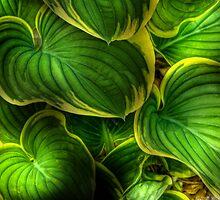 Leaves by Mike  Savad