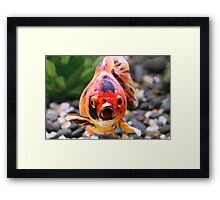 To My Astonishment  Framed Print