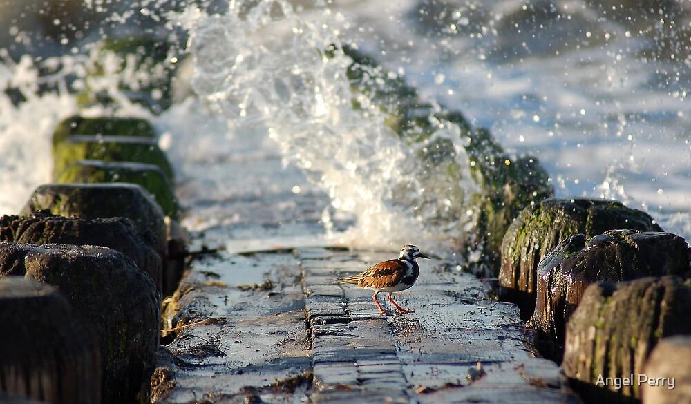 Splash by Angel Perry