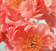 Paeonia #6 by ALICIABOCK