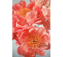Paeonia #6 Photographic Print