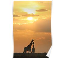 Giraffe Silhouette - Golden Beauty Poster