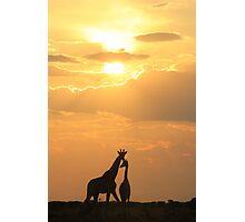 Giraffe Silhouette - Golden Beauty Photographic Print