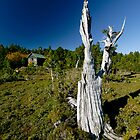 Alpine Hut'n'Pencil Pine by Robert Mullner
