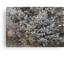 Hoarfrost on branches of spruce Canvas Print