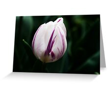 "Triumph Tulipa ""Flaming Flag"" Greeting Card"