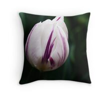 "Triumph Tulipa ""Flaming Flag"" Throw Pillow"