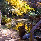 Autumn Colours Captured by Sadandal