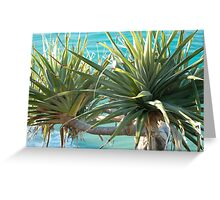 Pandanus palm Greeting Card