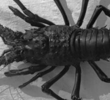 Lobster Black and White Photograph Sticker