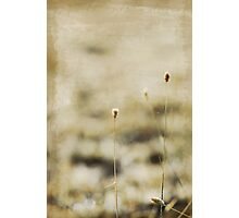 tall and thin Photographic Print