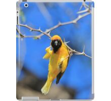 Golden Weaver - Hanging on for LIfe iPad Case/Skin
