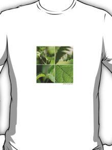 Focus on green T-Shirt