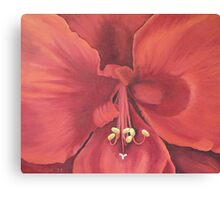 Amaryllis (close up) Canvas Print