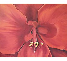 Amaryllis (close up) Photographic Print