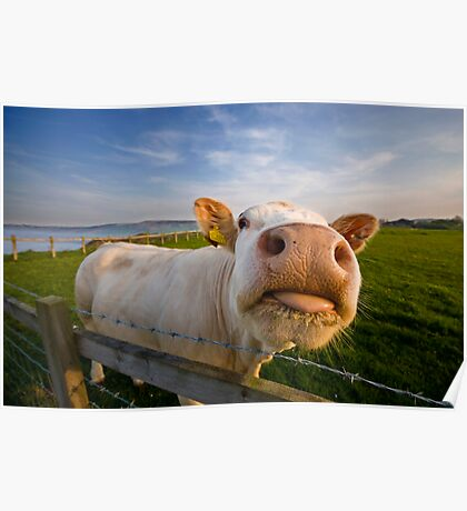 Cheeky Cow Poster