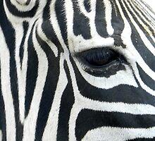 Eyeing it off  Wan Pi Safari Taiwan  by Sandra  Sengstock-Miller