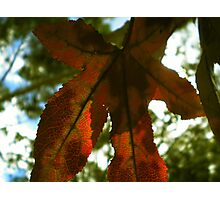 Autumn's Paradox Photographic Print