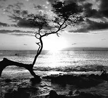Kona Sunset by SueAnne