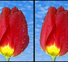 cross eye tulip stereo photo,the 50's are back in by zacco