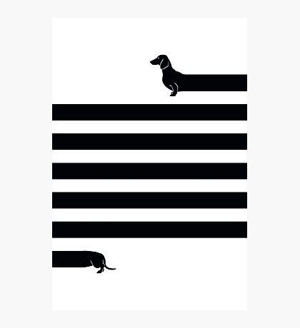 (Very) Long Dog Photographic Print