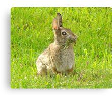 Nesting Bunny Canvas Print