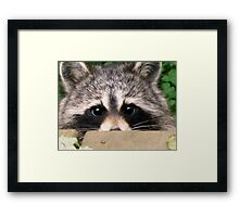 Shyly Hoping Framed Print