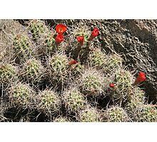Joshua Tree Park Cactus Photographic Print