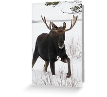 Moose on the Move Greeting Card