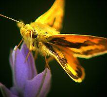 my friend moth  by Siva Kumaran