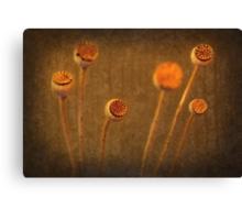 Honey Pots... Canvas Print