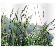 Rain on tall grass Poster