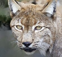 Caracal (The Persian Lynx) by buttonpresser