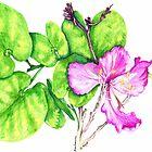 Pink Butterflies by boyerak