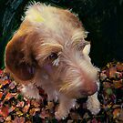 Spinone in Autumn by tomrhody