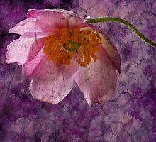 Purple Rain by John Edwards