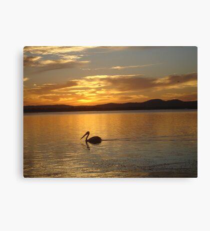 Orange Pelican Sunset Canvas Print