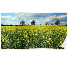 Rural scene, Bristol, UK Poster