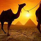 The Pyramids of Giza have survived the centuries as lasting symbols of Egyptian culture. The same might be said for the sturdy camels that haul visitors around to see the area&#x27;s many wonders. by alanalan