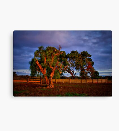 """In the Holding Yard"" Canvas Print"