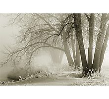 Ghosts In The Mist Photographic Print