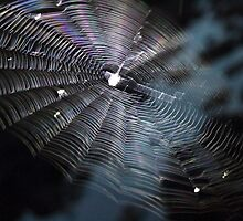 The Handiwork of a Spider  by beckclaye
