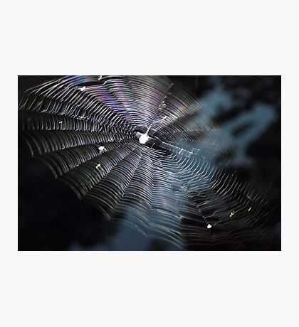 The Handiwork of a Spider  Photographic Print