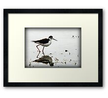 Black Necked Stilt - Wetlands Framed Print