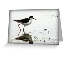 Black Necked Stilt - Wetlands Greeting Card