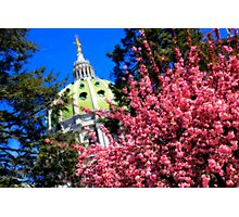 Capitol in Bloom Photographic Print