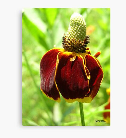 Mexican hat #3 Canvas Print
