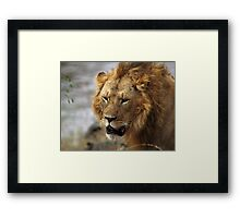 Portrait, Large Male Lion, Maasai Mara, Kenya  Framed Print