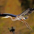 Great light for Flight!! by jozi1