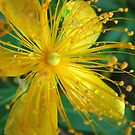 pollen overload by paula whatley